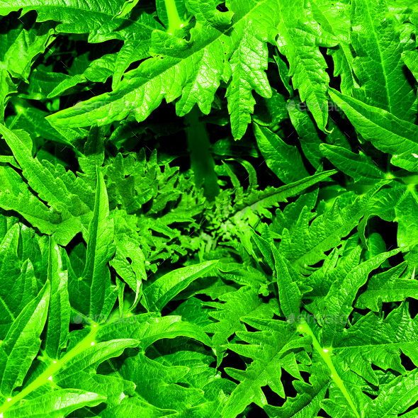 Background greens Minimal style - Stock Photo - Images