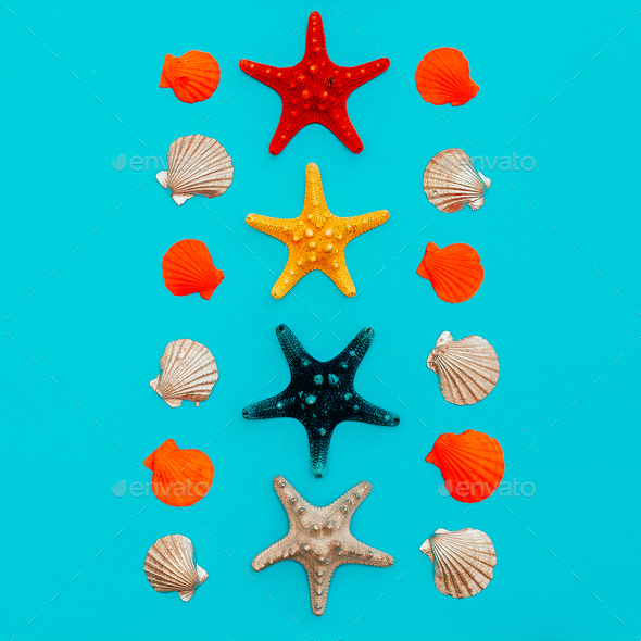 set of sea stars and seashells. Beach style. Minimal art - Stock Photo - Images
