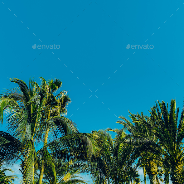 Palms in the blue sky. Minimal travel location - Stock Photo - Images