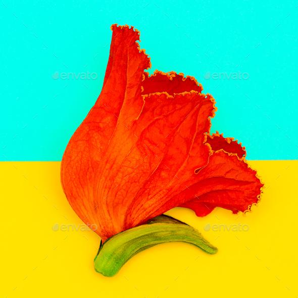 Orange flowers on a geometry half background. Minimal art - Stock Photo - Images
