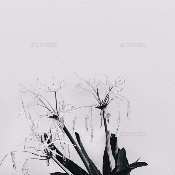 Modern art. Plant lovers. Flower. Black and white mood minimal c - Stock Photo - Images