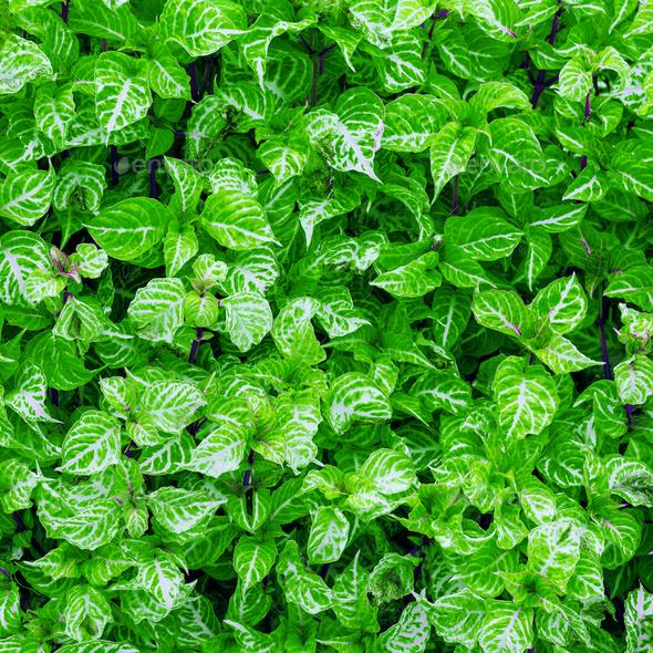 Minimal green background art design fashion idea - Stock Photo - Images