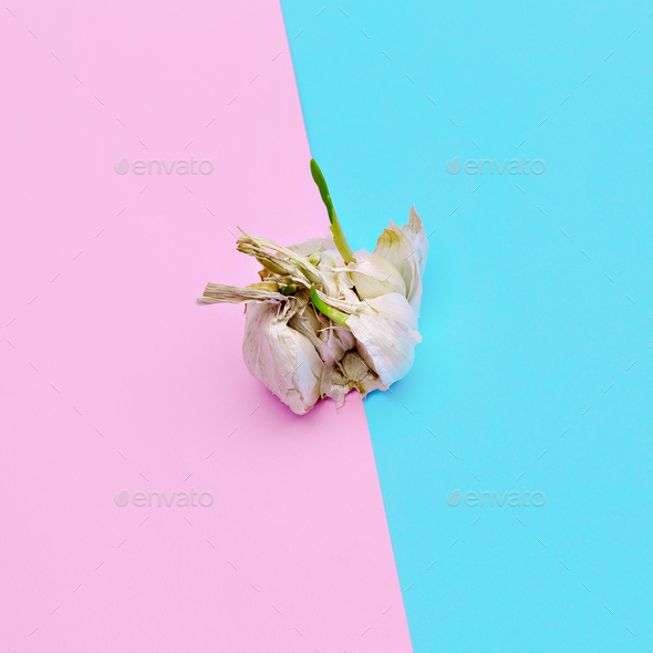 Garlic. Minimal style Candy Colors - Stock Photo - Images