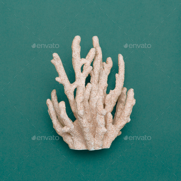 Coral on the blue Marine Concept Minimal art - Stock Photo - Images
