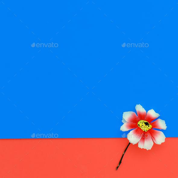 One Flower. Minimal design fashion - Stock Photo - Images