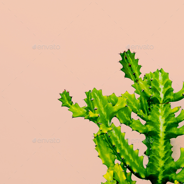 Outdoors. Minimal design. Cactus on pink. Fashion for print Trop - Stock Photo - Images