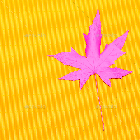 Autumn colored leaf. Minimal art design - Stock Photo - Images