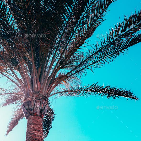 Palm background. Minimal - Stock Photo - Images