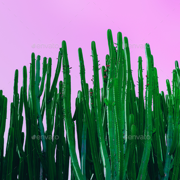 cactus on pink. Minimal design art - Stock Photo - Images