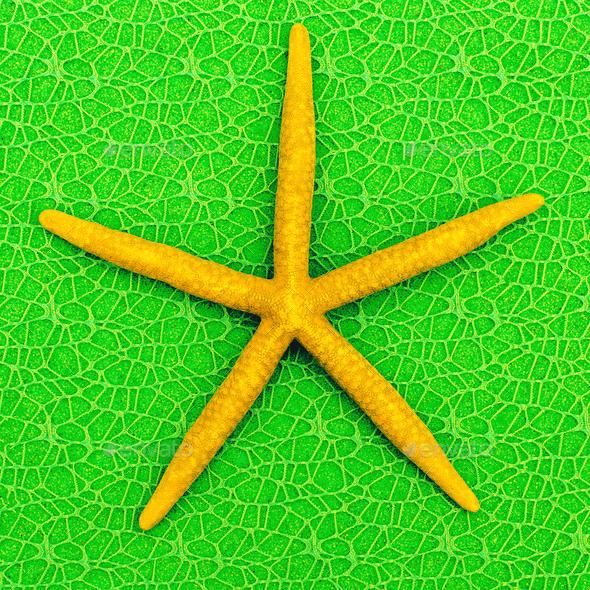 Starfish. Mood vacation. Minimal art - Stock Photo - Images
