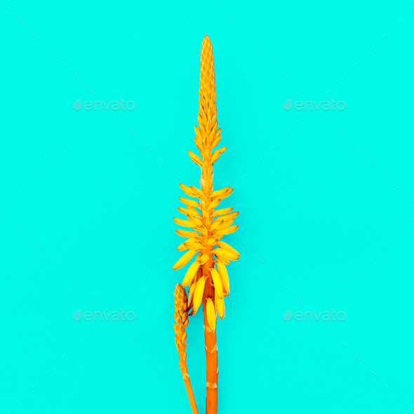 Yellow tropical flower. Creative design. Minimal fashion art gal - Stock Photo - Images