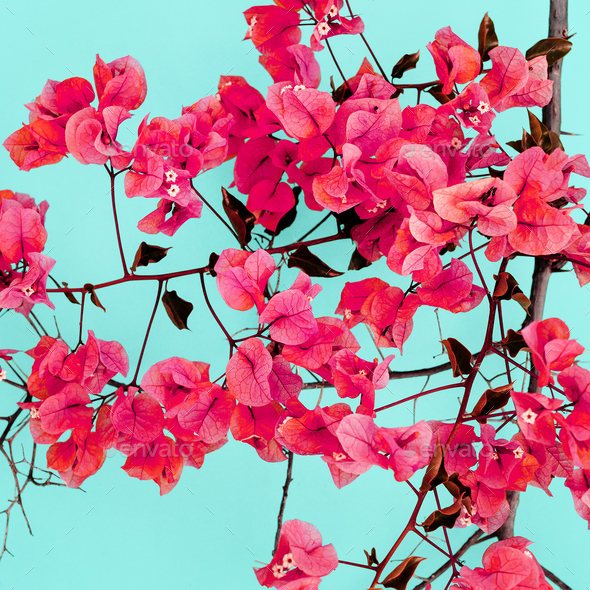 Spring Flowering