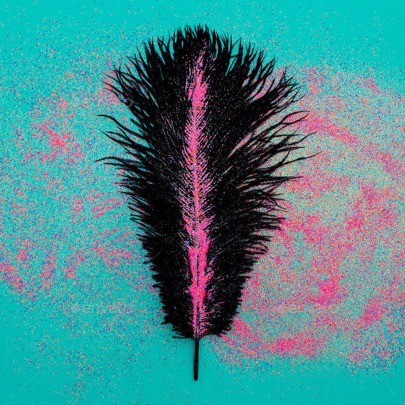 Black feather in sparkles Minimal art work - Stock Photo - Images