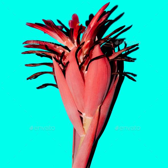 Tropical plant on blue. Minimal design fashion art - Stock Photo - Images