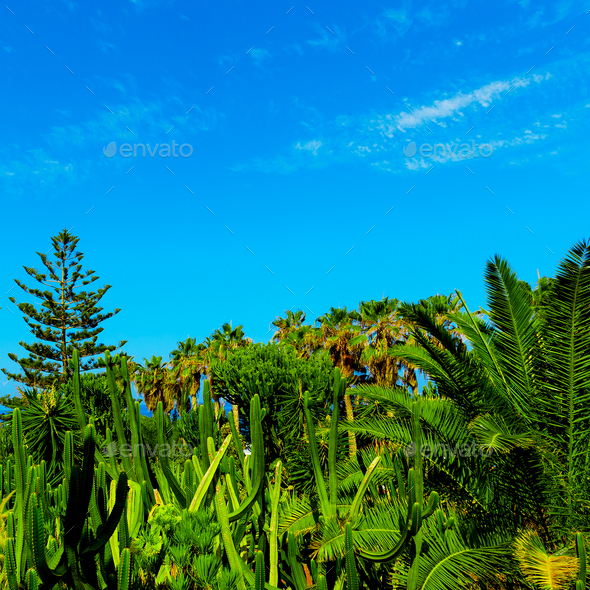 Tropical background. Palms and cacti. Canary Islands - Stock Photo - Images