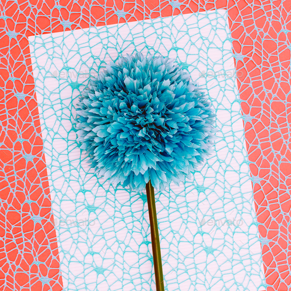 Blue flower. Minimal art - Stock Photo - Images