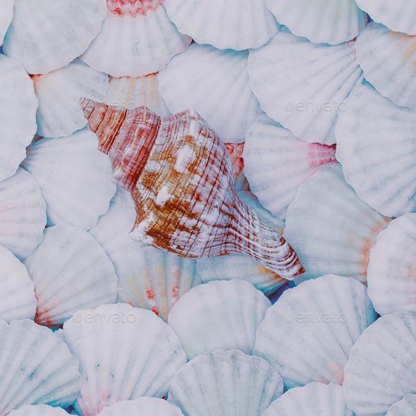 Shells background Vacation mood. Minimal art - Stock Photo - Images