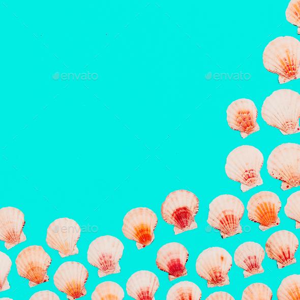 Shells background Marine mood. Minimal art - Stock Photo - Images