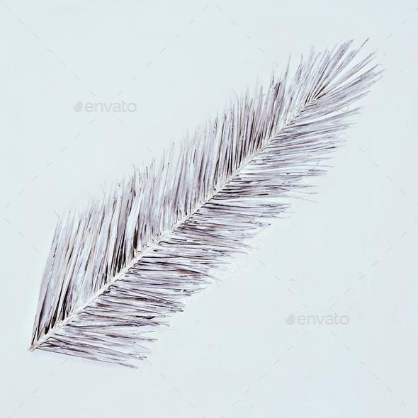 Painted palm leaf. White art minimal style - Stock Photo - Images