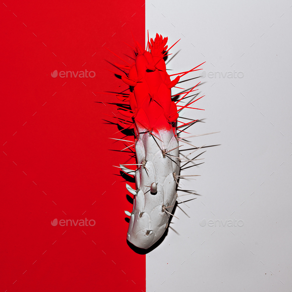 Cactus in red and white paint. Minimal art design - Stock Photo - Images