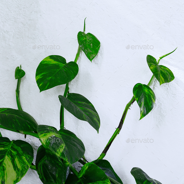 Plant on the white wall. Minimal green - Stock Photo - Images