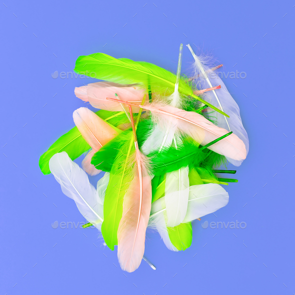 feather set candy colors minimal art design fashion - Stock Photo - Images