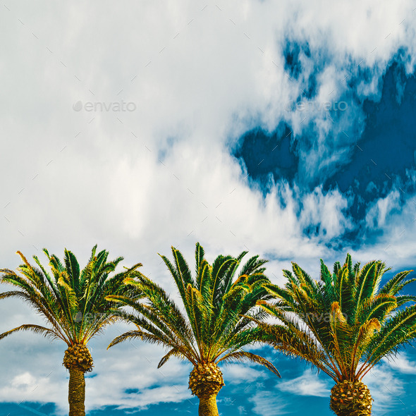 Palms. Tropical location. Travel Minimal - Stock Photo - Images