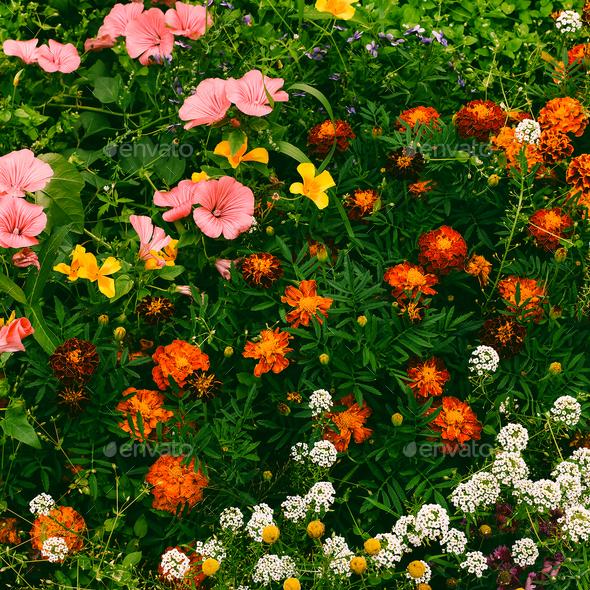Flowers background Minimal style - Stock Photo - Images