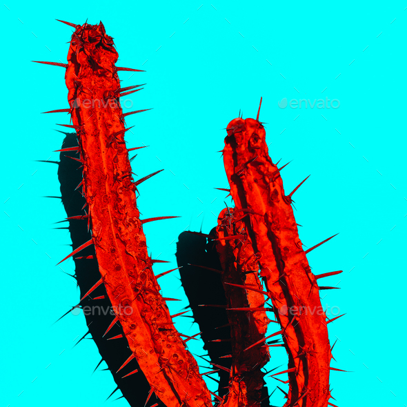 Red Cactus with shadow. Creative design. Minimal art gallery - Stock Photo - Images