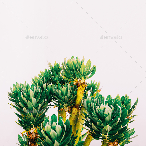 Outdoors. Minimal fashion design. Tropical plant on a white wall - Stock Photo - Images