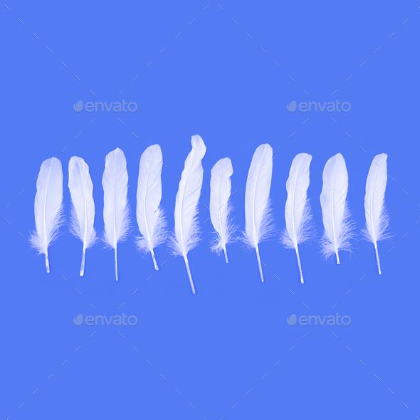 Set of white feathers. Minimal art - Stock Photo - Images