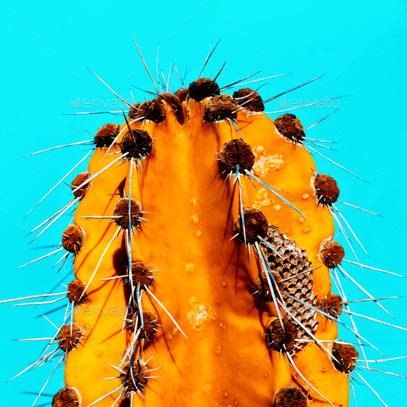 Cactus Honey. Minimal fashion art gallery - Stock Photo - Images
