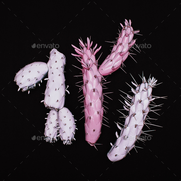 A set of Creative cactus. Minimal art Surreal - Stock Photo - Images