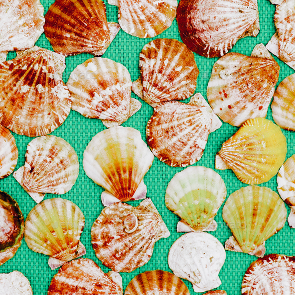 Background of shells. Ocean mood. Minimal art - Stock Photo - Images