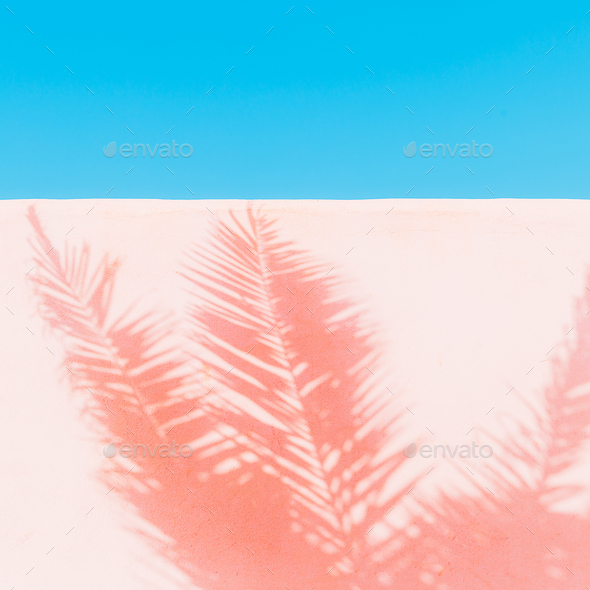 Palm. Shadow on the wall. Minimal art. Tropical fashion mood - Stock Photo - Images
