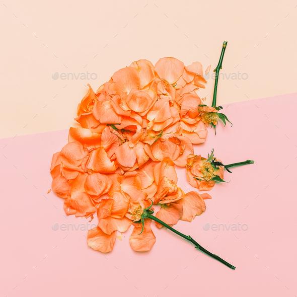 Minimal creative design. rose petals on pastel background. Art H - Stock Photo - Images