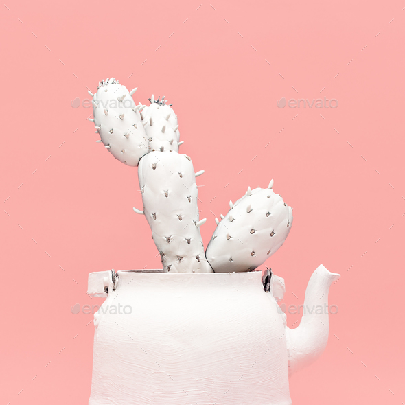 White Cactus in a White Teapot. Minimal style design - Stock Photo - Images