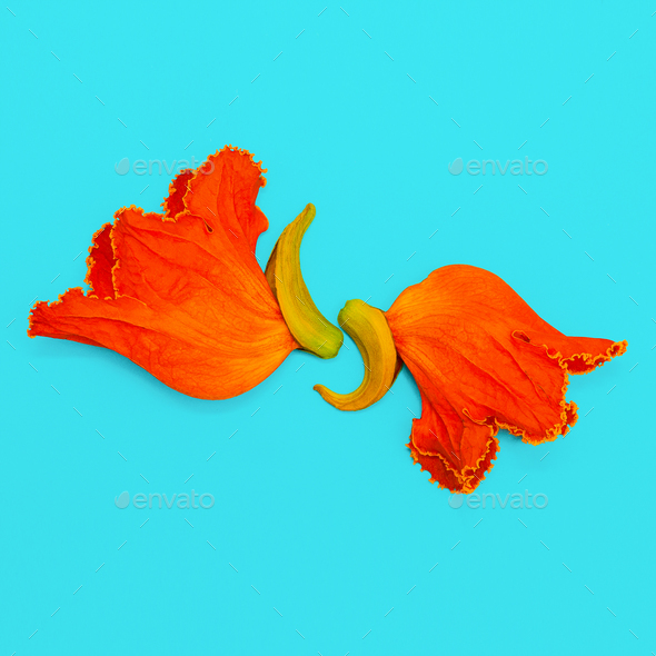 Orange flowers on a blue background. Minimal art - Stock Photo - Images