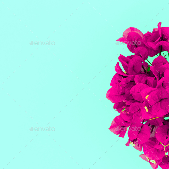 Tropical flowers Fuchsia. Minimal design art - Stock Photo - Images