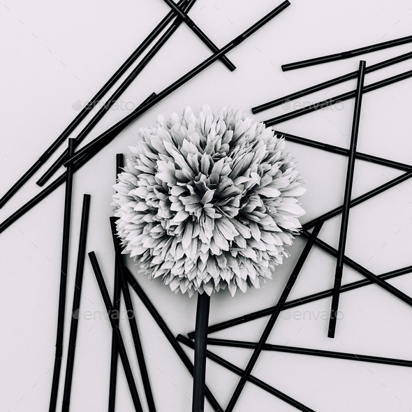 Flower black and white minimal art - Stock Photo - Images