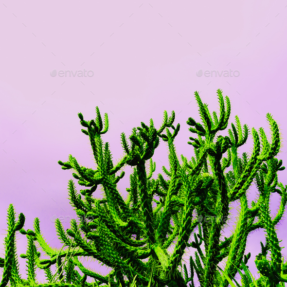 Cactus Tropical on the pink  minimal fashion art design - Stock Photo - Images