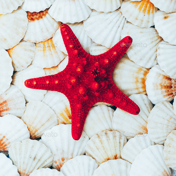 background seashells and starfish. Beach mood. Minimal art - Stock Photo - Images