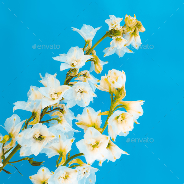 Blooming Flower minimal design art - Stock Photo - Images