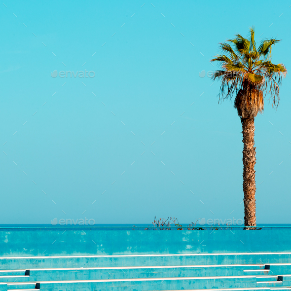 Palma in the location. Tropical minimal. - Stock Photo - Images