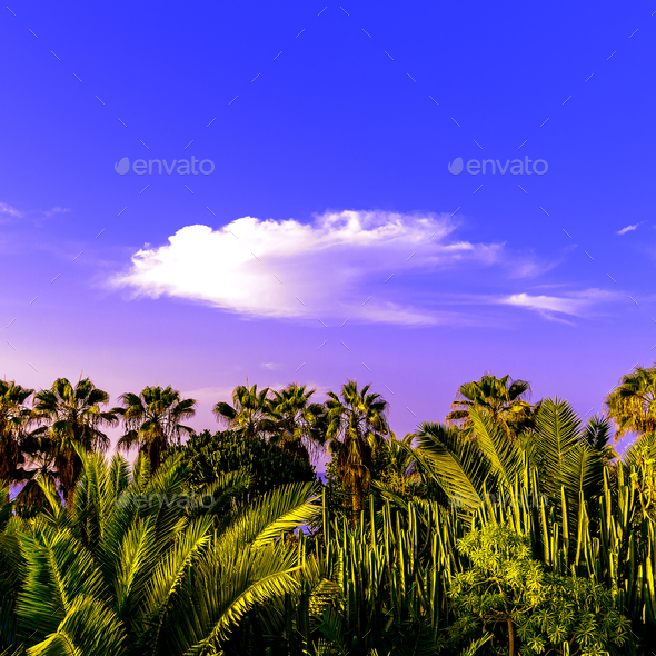 Canary Islands Tenerife Palms and green background minimal - Stock Photo - Images