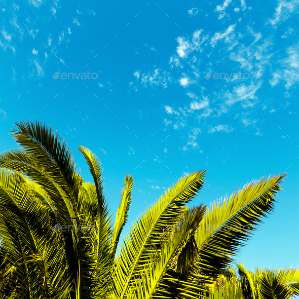 Tropical minimal. Palm leaf. - Stock Photo - Images