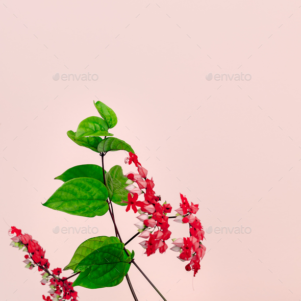 Red tropical flower on pink. Minimal art - Stock Photo - Images