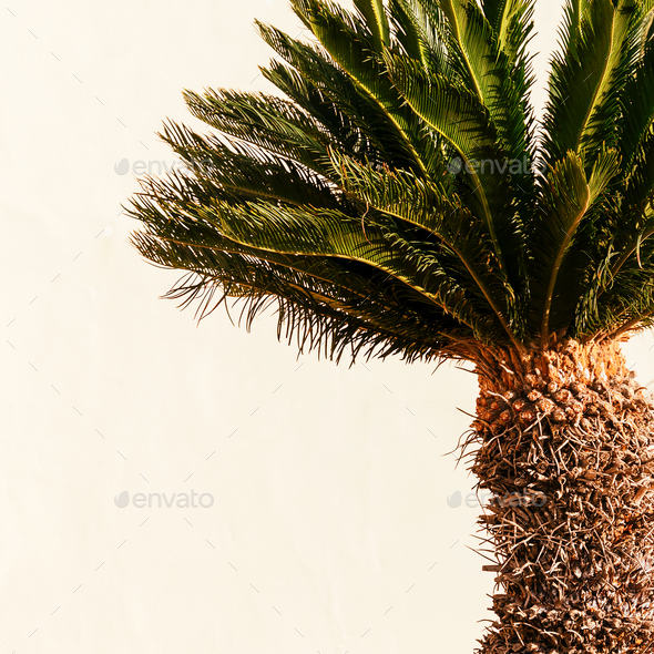 Minimal art. Tropical mood. Mini palms - Stock Photo - Images
