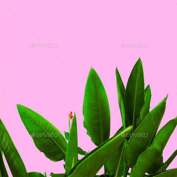 Plant on pink.  Tropical Flower  minimal art design - Stock Photo - Images