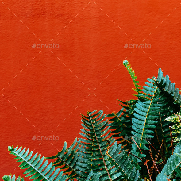 Tropical Plant on a Wall Background Green minimal style - Stock Photo - Images